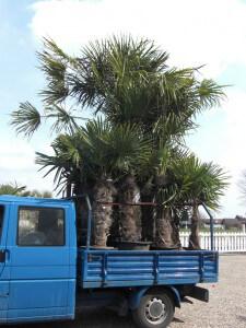 Pflanzen Transport. So kommen sie im Umkreis von 50 km von uns zu Ihnen.