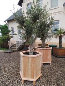 Kübel für mediterrane Pflanzen mit eingebauten Winterschutz