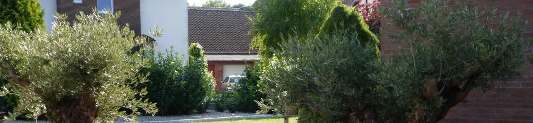 palmen olivenb ume mediterrane pflanzen kaufen mieten. Black Bedroom Furniture Sets. Home Design Ideas