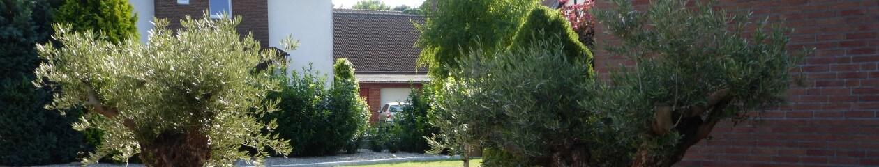 Palmenhof Ilten Ihr Partner für mediterrane Pflanzen.