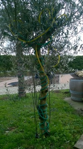 Winterschutz mit Lichterschlauch für Olivenbäume