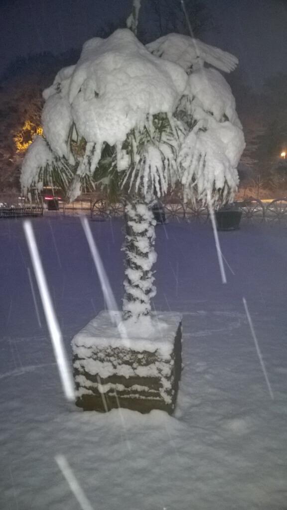 Ratgeber über Winterharte Palmen, wie winterhart sind die wirklich